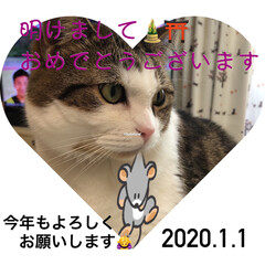 にゃんこ同好会/足長マンチカン/お正月2020 それぞれの願う素敵な年でありますように💓
