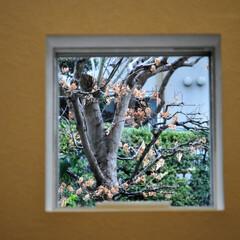 住まい/小窓/玄関/FIX 【最新竣工実例 A邸】 小さな小窓は生活…