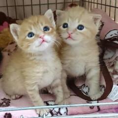 保護ねこ/なかよし兄弟/ペット/猫 大きくなったなぁ…(*´艸`*) 1枚目…