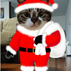 にゃんこ同好会/クリスマス2019 こういうの着てほしいんだけどなぁ… うち…(1枚目)