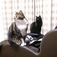 LIMIAペット同好会/ペット/猫/にゃんこ同好会/うちの子自慢 キジ白の長男めんち 黒猫の次男くにお で…(5枚目)