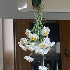 鶏肉としめじの炊き込みご飯/花かんざしのドライフラワー 花かんざしドライフラワー作成中💕 花壇の…