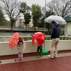 動物園 今日は孫ちゃんとあいにくの雨ですが。 動…