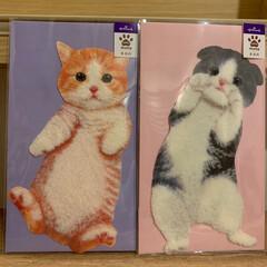 ポストカード/猫 可愛いので買っちゃいました❣️   ごー…