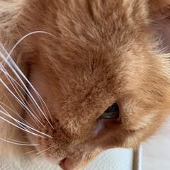 にゃんこ同好会/無料コーヒー☕️/セブンイレブン/猫 おはようございます⛅️  ドアップ祭りに…