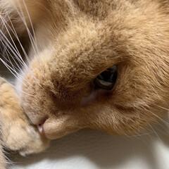 お外/眠い💤/アンモニャイト/にゃんこ同好会/猫 おはようございます🌦  昨日の昼間玄関で…