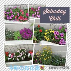お花大好き💕/にゃんこ大好き💕 こんにちは♫  今朝のお花達元気に咲いて…