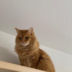 ペット/猫 今日は、高い所から… おはようございます…(6枚目)