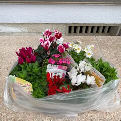 寄せ植え/鉢/お花💐/雑貨 新しく鉢を3個購入(ライオン❣️ミッキー…