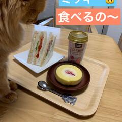 LIMIAペット同好会/ペット/猫/スイーツ こんにちは⛅️  お昼ご飯とおやつです😋…
