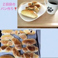 ニャンコ同好会/コンベクションオーブントースター/初めてのパン作り/ニトリ こんにちは😃  6月6日に、初めてのパン…(3枚目)