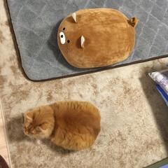 クッション/ペット/猫 1枚目 ミッキーが小さく見えるー❣️ 2…