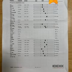 にゃんこ大好き💕 こんにちは🌞  今日は病院受診🏥の日でし…(3枚目)