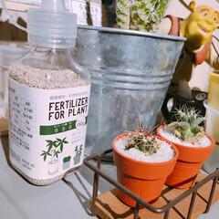 Vita/雑貨/肥料/植物/インテリア/フォロー大歓迎/... 春になり大好きな植物たちも いきいきとし…