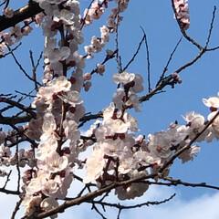 小さい春 #小さい春