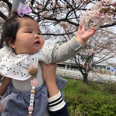 春のフォト投稿キャンペーン/春の一枚 初桜🌸