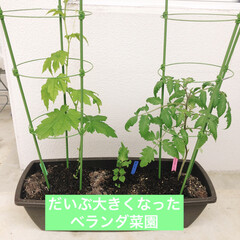 日本製 鉢 プランター ガーデニング リッチェル Richell ハナール プランター 65型 | リッチェル(プランター)を使ったクチコミ「プランター栽培を久しぶり 今回は手始めに…」