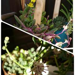 花のある暮らし/ガーデニング/リミアの冬暮らし 今日の信州は穏やかで暖かい✨☀️✨ 毎日…