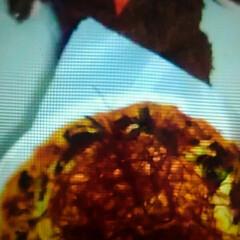 プルコギピザ/クックパッド/2018/冬/クリスマス/おうちごはん/... 今年の最大の料理はお正月のおせちとクリス…