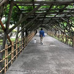 函館/五稜郭公園/パピヨン/LIMIAペット同好会/わんこ同好会/おでかけ/... 早朝散歩♡ 丁度、ラジオ体操をやっていた…