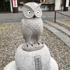 函館護国神社/御朱印集め/おでかけ/旅行/風景