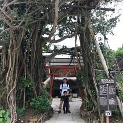 琉球村/わたしのGW 沖縄の琉球村。親子ガジュマルの木があって…