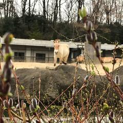 動物園にも春/小さい春 動物園の周りにも、お花の芽がついてるよ!…