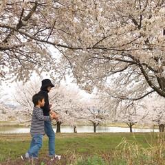 桜/平成最後の一枚 満開の桜並木をばーばとお散歩。気持ちいい…
