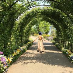 緑のトンネル/おでかけワンショット ガーデンに緑のトンネルがあって、深呼吸し…
