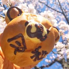 令和パン/令和元年フォト投稿キャンペーン 令和パン食べました!さくらと一緒にめでた…(1枚目)