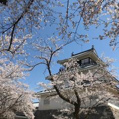 お城/平成最後の一枚 新潟県長岡市の悠久山にあるお城。歴史もあ…