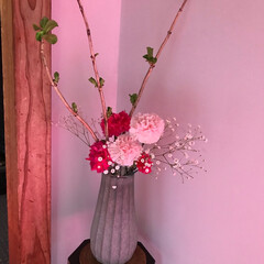 カーネーション/春の一枚 カーネーションが飾ってあり、母の日も近づ…