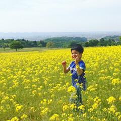 菜の花畑/おでかけワンショット 菜の花畑が気持ちよくてニコニコの息子。 …