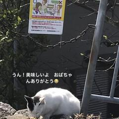 ノラちゃんシリーズ/堤防 おはようございます☁️〜☔️予報 先日堤…(2枚目)