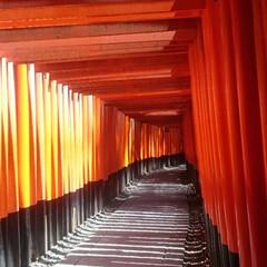 京都/千本鳥居/伏見稲荷大社/鳥居/朱色/おでかけ/... 朱色の鳥居。 私の待ち受け。 お気に入り…