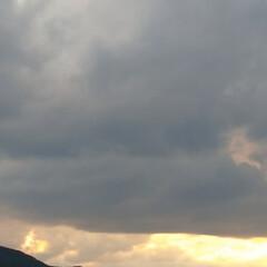 散歩/コスモス/ヒマワリ/雲/空/暮らし/... 今日も田んぼ道をお散歩🐶 どんどん涼しく…(4枚目)