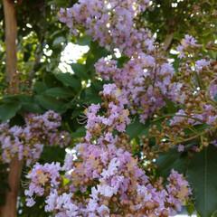 散歩/クモの巣/花/住まい/暮らし/フォロー大歓迎/... お花が散ってクモの巣🕸️小花模様になって…