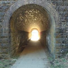 ドライブ大好き/清水/わさび/トンネル/神社/おでかけ/... 鳥居の向こうにはトンネルが?! 興味津々…(2枚目)
