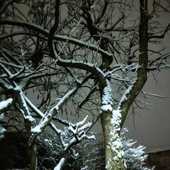 寒い/冬が来た!/雪/リミアの冬暮らし/住まい/暮らし/... とうとう😖雪が…積もってる‼️(*゚Д゚…