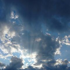 散歩/コスモス/ヒマワリ/雲/空/暮らし/... 今日も田んぼ道をお散歩🐶 どんどん涼しく…