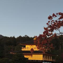 夕日/キラキラ/紅葉/金閣寺/おでかけ キンキラキン✨✨🍁