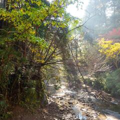 渓谷/もみじ/紅葉/こうよう/光芒/こうぼう/... 千葉県梅ヶ瀬渓谷 養老渓谷の支流の隠れた…