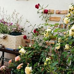 小屋/大好きな場所/癒しの空間/庭/バラ/バラ庭/... キノコさんから小屋全体写真のリクエストが…