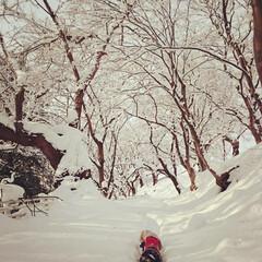 雪山/登山/フォロー大歓迎/冬/ペット/ペット仲間募集/... 雪山登山かっ😂  《注》ここは公園です