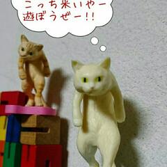 ケロちゃん/親バカ部/サイコ/にゃんこ同好会 恐怖のケロちゃん劇場😱  女優ケロちゃん…