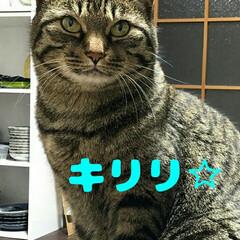 ケロちゃん/猫の日/2月22日/親バカ同盟/ニャンコ同好会 今日はにゃーにゃーにゃーで猫の日ニャ❗ …