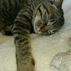 ケロちゃん/フミフミ/お昼寝/親バカ/にゃんこ同好会 ケロちゃんのお昼寝… そしてフミフミ💗