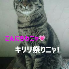 キリリ祭り/キリリ!/ケロちゃん/ニャンコ同好会/猫 可愛い写真がなかなか撮れないので キリリ…