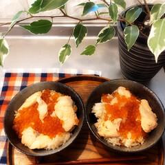 今日のお昼ごはん/わが家の味/はらこ飯/今日のごはん  久々の休みで ゆっくりできる日だったの…