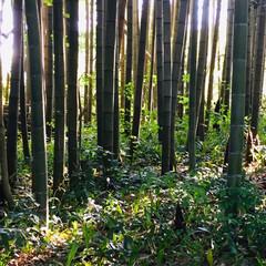 朝/竹林/タケノコ/春のフォト投稿キャンペーン/GW/至福のひととき/... ✨朝✨☀️ 早起きして タケノコ掘り👍🏻